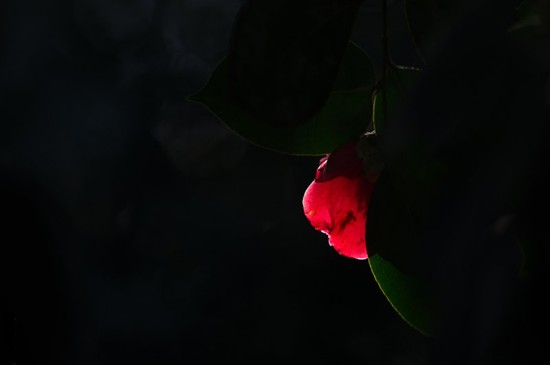 <唯美红色花卉光影高清桌面壁纸