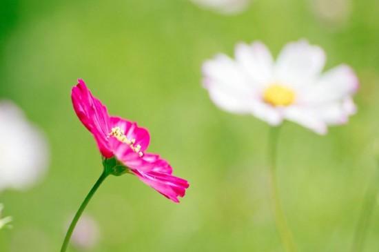 <春季清新唯美花卉图片电脑壁纸