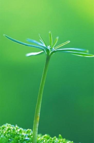 小清新绿色植物护眼高清