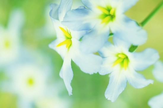<清新好看的花卉图片电脑壁纸