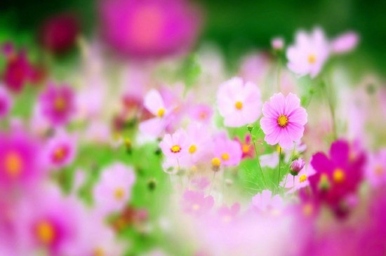 <唯美花海春季风景图片壁纸