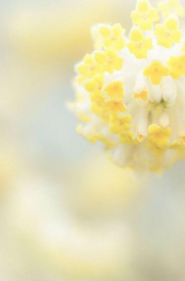 小清新綠色護眼植物圖片手機壁紙