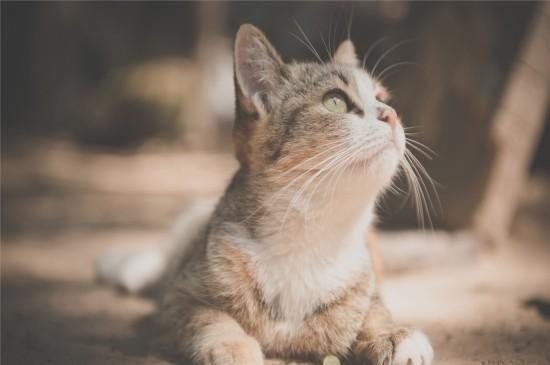 可爱萌宠猫咪高清桌面壁纸