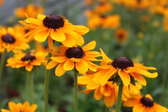 唯美清新花卉高清摄影图片桌面壁纸