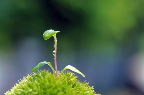 小清新绿色养眼植物桌面壁纸
