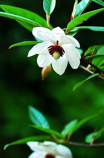 小清新唯美植物花卉图片手机壁纸