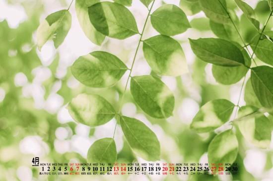 2019年4月植物花卉电脑