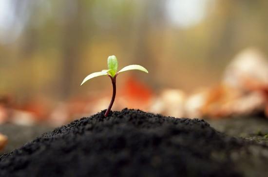 小清新植物嫩芽绿色护眼图片桌面壁纸