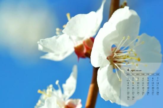 2019年4月小清新可爱花卉高清日历壁纸