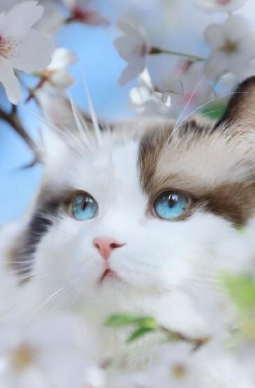 可爱萌系猫咪手机壁纸