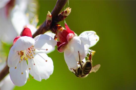 花丛中的小蜜蜂高清桌面壁纸