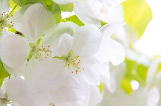 清新纯白花卉高清桌面壁纸