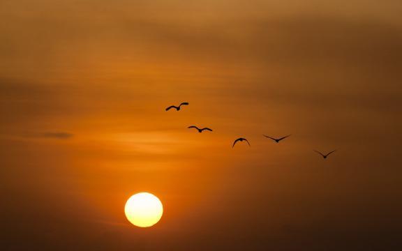 傍晚最美的夕阳风光