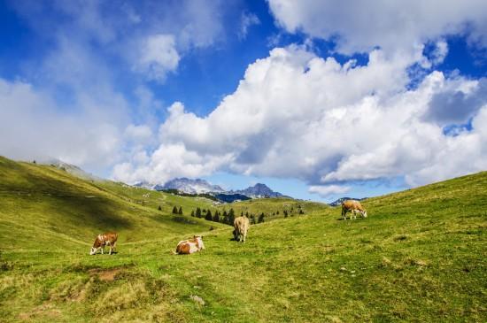 唯美护眼的绿色草原风光图片壁纸