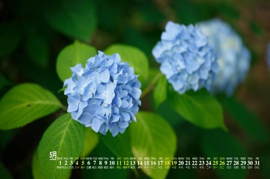 2019年5月小清新植物桌面日历壁纸