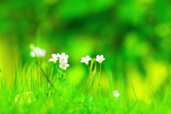 绿色护眼植物图片电脑壁纸