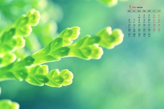 2019年5月清新护眼植物图片日历壁纸