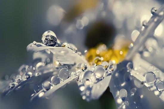 唯美养眼花卉高清桌面壁纸