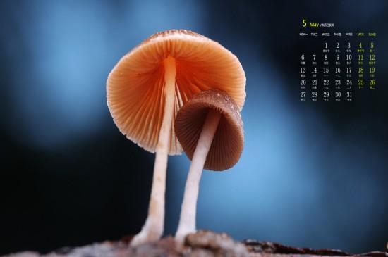 2019年5月呆萌小蘑菇唯美高清日历桌面壁纸