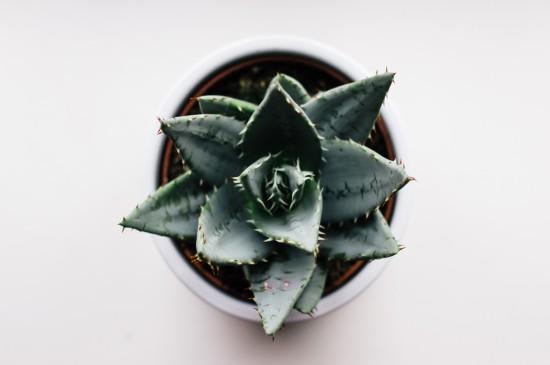 小清新绿色植物盆栽图片桌面壁纸
