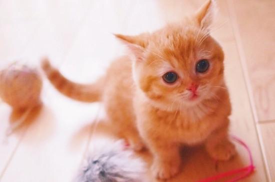 粉嫩可爱的小奶猫唯美治愈高清手机壁纸