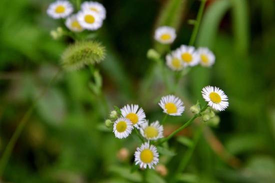 绿色小草护眼图片电脑壁纸