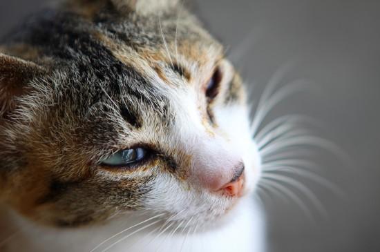 可爱猫咪高清宽屏电脑桌面壁纸图片