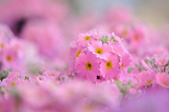 唯美小花高清花卉图片桌面壁纸