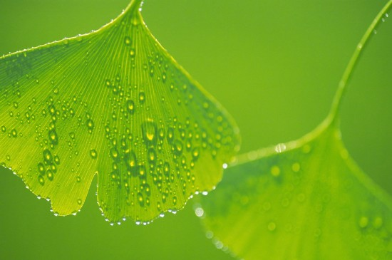 清新植物绿叶高清桌面壁纸
