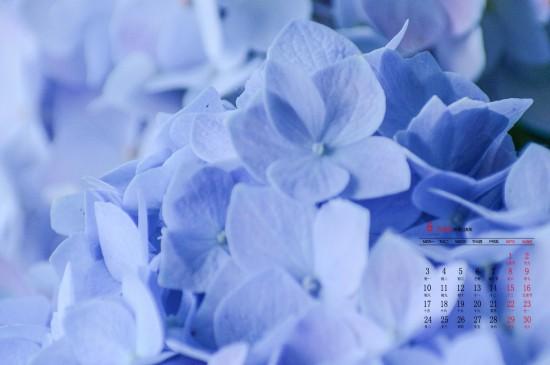 2019年6月梦幻蓝色绣球花高清日历壁纸