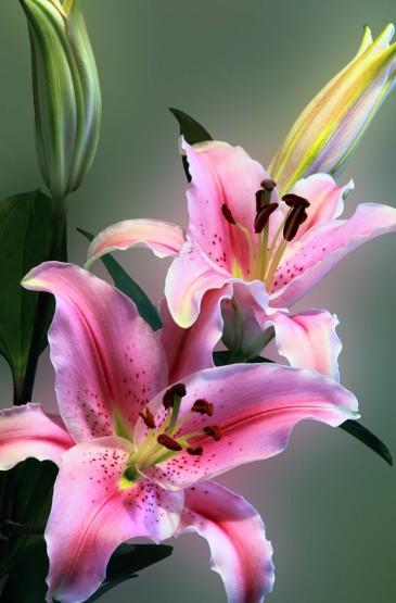 唯美好看的花卉图片手机