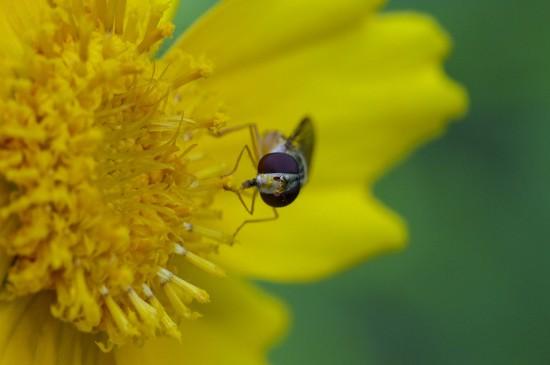夏日花间蜜蜂高清桌面壁纸