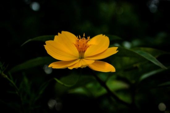 唯美绽放的花朵图片电脑壁纸
