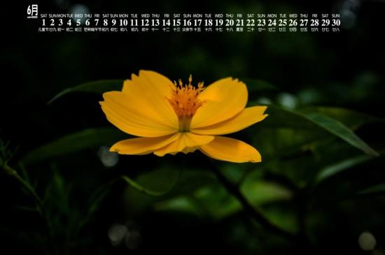 2019年6月唯美花卉图片日历壁纸