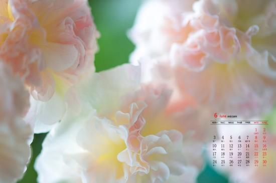 2019年6月梦幻鲜花唯美高清日历壁纸