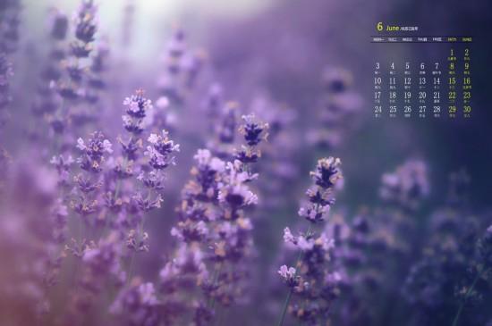 2019年6月唯美紫色薰衣草日历图片桌面壁纸