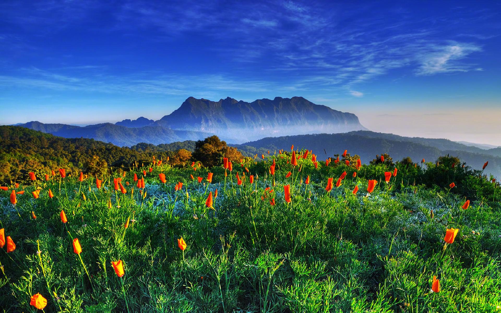 唯美意境花卉风景桌面壁纸