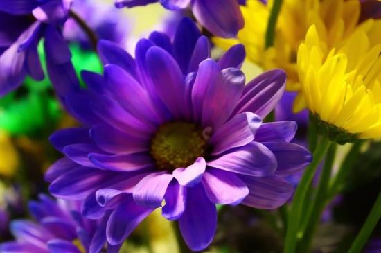 精致唯美的花卉植物图片桌面壁纸
