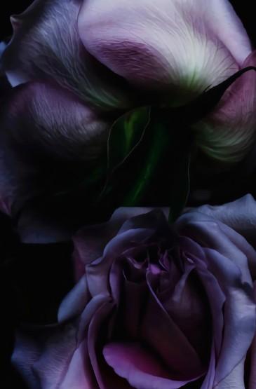 精致唯美的花卉图片手机