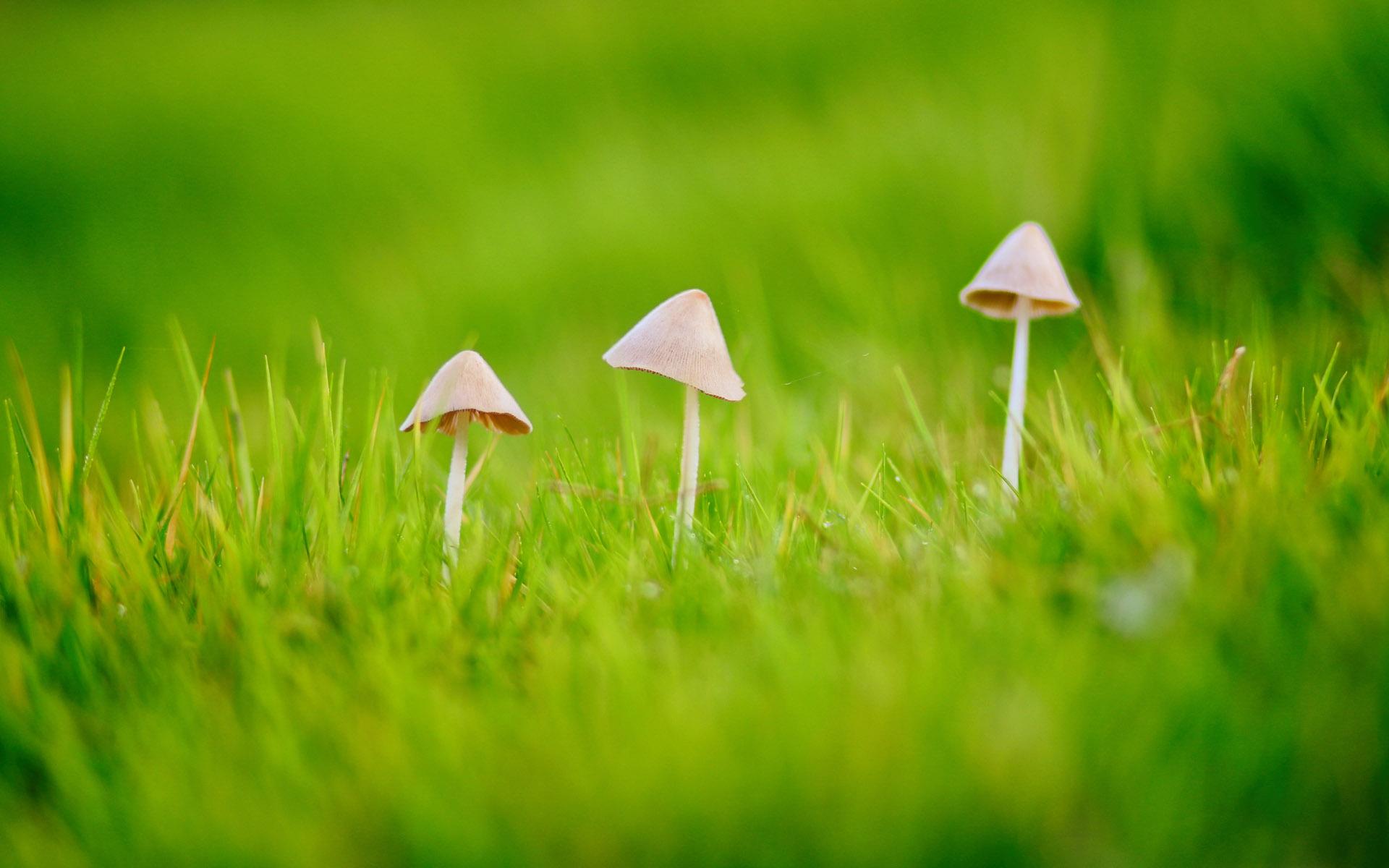 清新护眼的小蘑菇花卉图片桌面壁纸