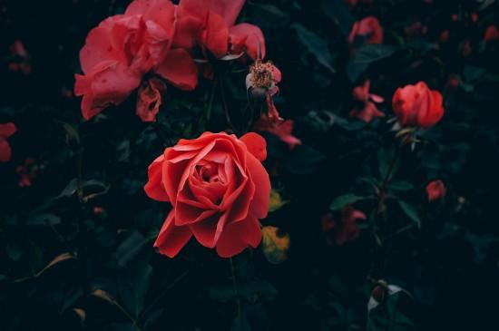精选绿色植物养眼合集休闲之余给眼睛放个假桌面壁纸