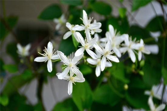 白色野外鲜花高清桌面壁纸