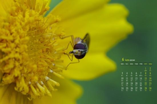 2019年6月蜜蜂植物唯美