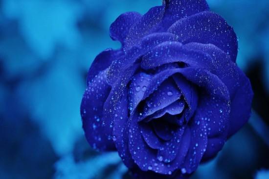 唯美蓝色鲜花高清桌面壁