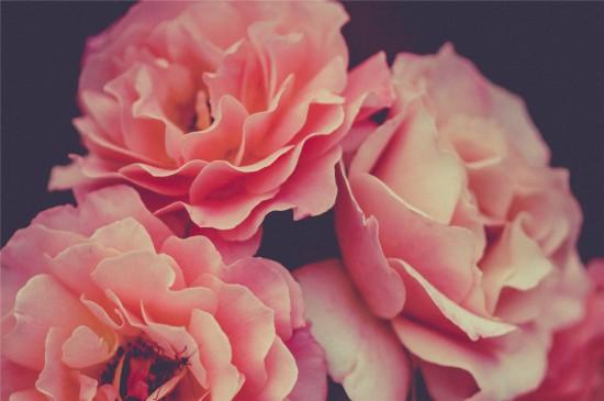 炫彩唯美花卉高清桌面壁