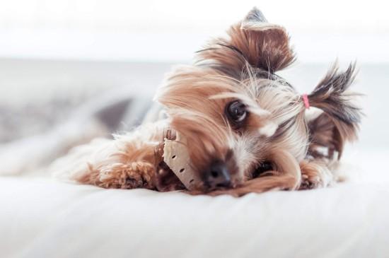可爱宠物狗狗图片桌面电