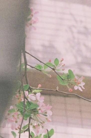 粉色花朵植物手机壁纸