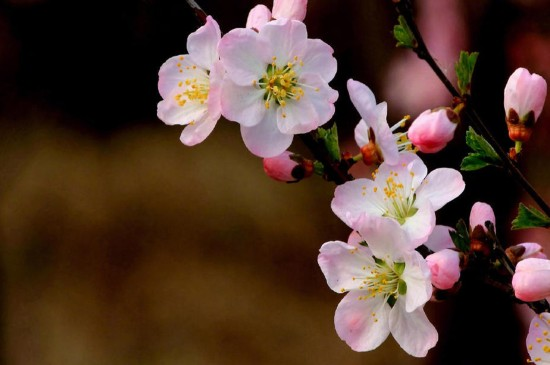 鲜艳唯美的花卉图片电脑壁纸