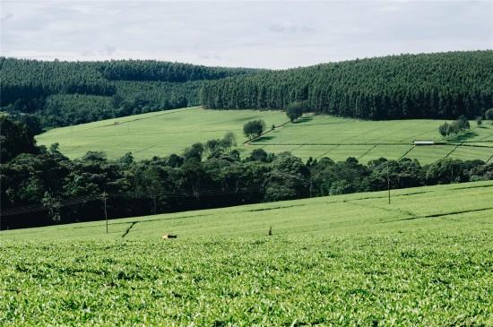 漂亮的田野风光高清桌面壁纸