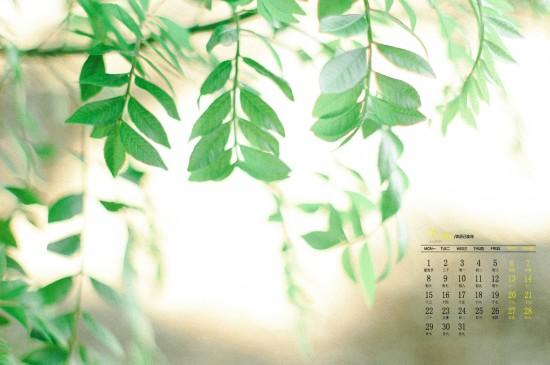 2019年7月小清新植物绿叶高清日历壁纸